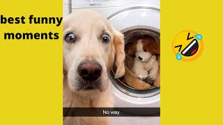 Cute Pets and Animal Compilation #1