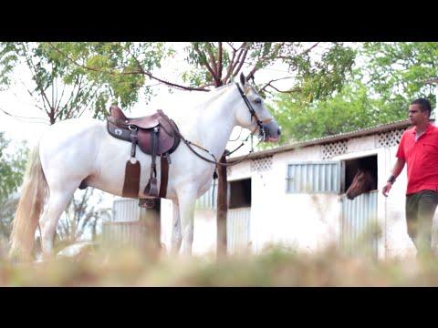 c334508dc55 Se não existisse cavalo - Manoel Jr.   Forro Vaqueiro de Luxo 2017