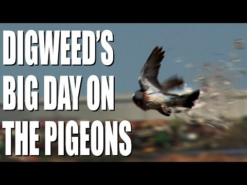 George Digweed's big day on the pigeons