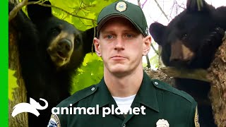 Game Wardens Help Stray Bears | North Woods Law by Animal Planet
