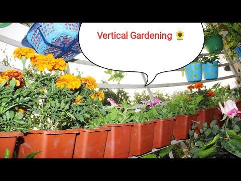 Vertical Gardening 🌻..कम जगह मे गर्डनिगं करने का आसान तरीका /Balcony Garden