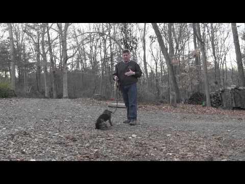 German Shorthaired Pointer Puppy Training | Winston Salem NC