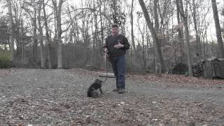 preview picture of video 'German Shorthaired Pointer Puppy Training | Winston Salem NC'