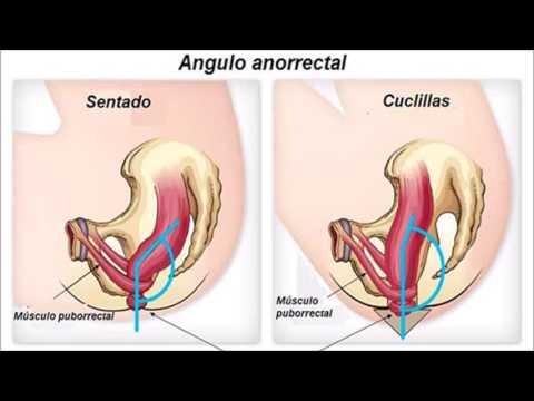De próstata en los hombres la manera de curar