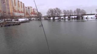 Royal fish - рыболовный клуб