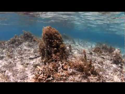 Picky Eater Fish Endanger Coral Reefs