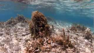 Newswise:Video Embedded picky-eater-fish-clean-up-seaweeds-on-coral-reefs
