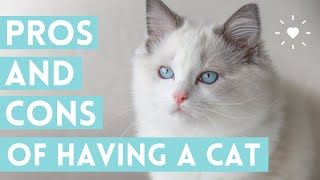 OWNING A CAT 😸 (pros and cons of getting a cat that you NEED to know!)