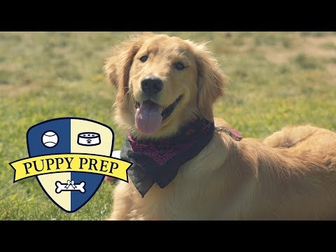 Meet The Puppies Training To Be Service Dogs - YouTube