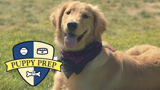 Meet The Puppies Training To Be Service Dogs
