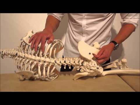 Schmerzen im Gelenk des Ellbogen- und Schulter