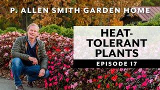 Heat Tolerant Flowers: Garden Home VLOG (2019)