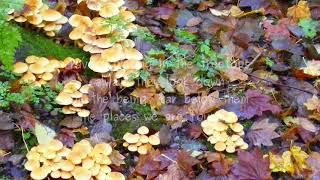 Fungi...Fun Girls