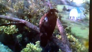 Decorah Baby Eagle Talks To A Dog
