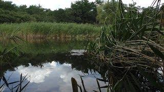 Плотва летом на поплавочную удочку наживка