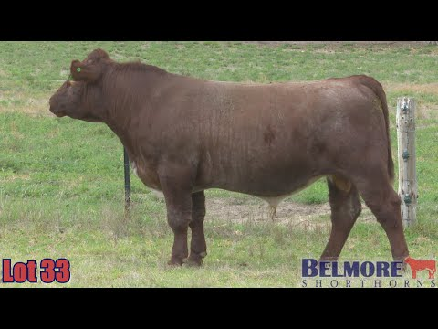 BELMORE QUINN Q183
