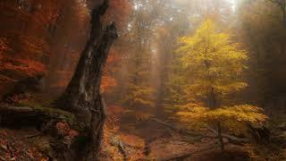 Autumn VII: Trifold