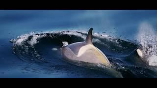 Southern Ocean Sanctuaries: Protecting the World's Final Ocean Frontier