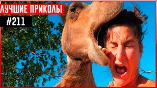 ПРИКОЛЫ 2017 Декабрь #211 ржака до слез угар прикол - ПРИКОЛЮХА