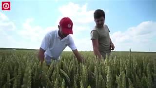 Pasiune pentru agricultura, SC HOLCOMB SRL, grau Apache, rapita LG