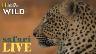 Safari Live - Day 208   Nat Geo Wild