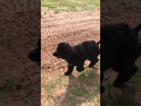 Barron explores the front yard