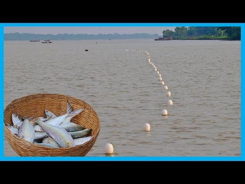 Amazing Fast Hilsa Fishing Skill (PART 96) - Catching Hilsa Fish Big in the River