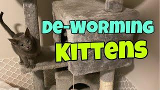 De-worming Kittens