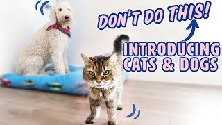 How to Introduce Dogs & Cats SAFELY 🐱🐶 What to AVOID
