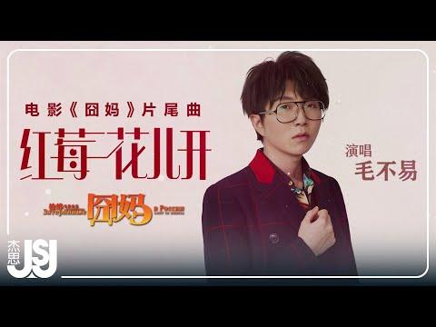 毛不易《紅莓花兒開》電影【囧媽】片尾曲 Official Lyric Video