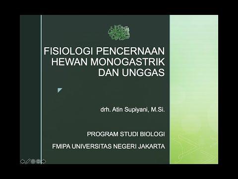 Hpv humán papilloma vírus
