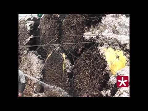Incêndio destrói 250 toneladas de algodão em empresa de Patos de Minas