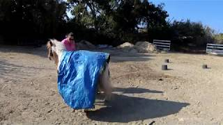 Asterix and the Tarp