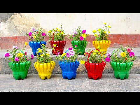 Make Beautiful Flower Baskets From Discarded Plastic Bottles | How to Grow portulaca