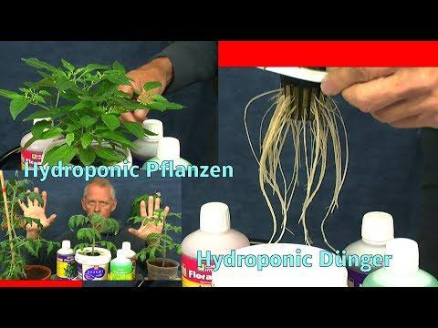 Pflanzen in der Hydroponic mit Hydroponic Dünger düngen und welches Wasser Tomaten Chili und andere