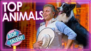 Top 5 Smart Animal Acts on BGT & AGT 2019   Top Talent