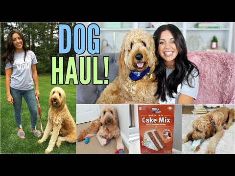 DOG HAUL! MY GOLDENDOODLE PUPPY DUDE! T.J.MAXX, PETSMART, HOMEGOODS!