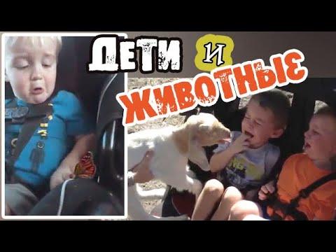 , title : 'Смешные ДЕТИ и ЖИВОТНЫЕ - Подборка приколов с детьми// Реакция детей на животных'