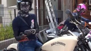 素敵なモデル 美女ライダー 女性ライダー 2012 XL883Nアイアン Harley-Davidson Sportster Cafe Racer カスタム ESTRELLA 和歌山