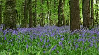 Short Relaxing Meditation of Forest Sounds & Birdsong-Johnnie Lawson Calm Relaxation