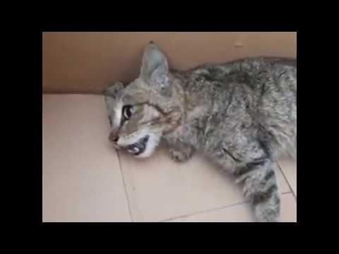 #briefly - Психического больного в Баку избили за убийство кошек и собак