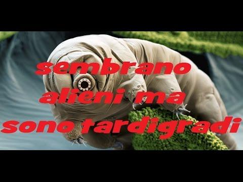 Giardiya lyambliya sintomi