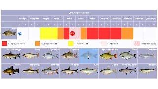 Клев рыбы в зарайске на неделю
