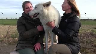 10 Опасных Собак, Способных Убить Человека