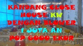 Kandang Close House Ayam Pedaging Broiler Sistem Blower KW