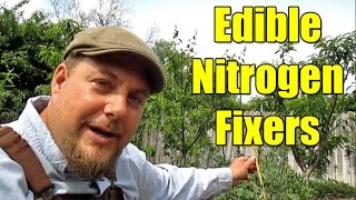 5 Cold Hardy Edible Nitrogen Fixer Plants Worth Growing!
