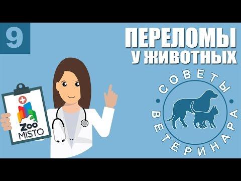 Переломы у животных   Как оказать первую помощь при переломе у собак или кошек   Советы Ветеринара