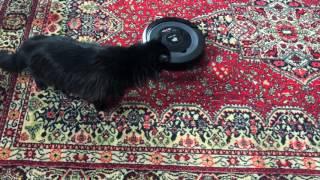Cand pisica nu-i acasa Spider face super curatenie| by Andreea Balaban