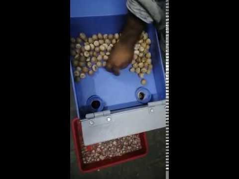 Automatic Supari Chips Cutting Machine