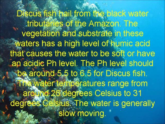 Discus Fish - Ideal Fish Tank Conditions For Discus Fish